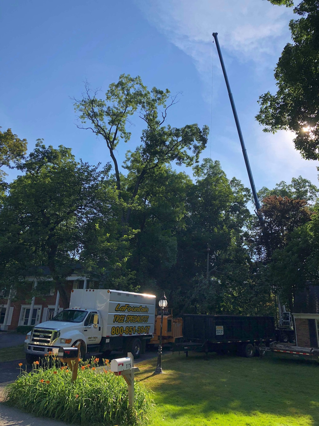 LaFountain Tree Specialists