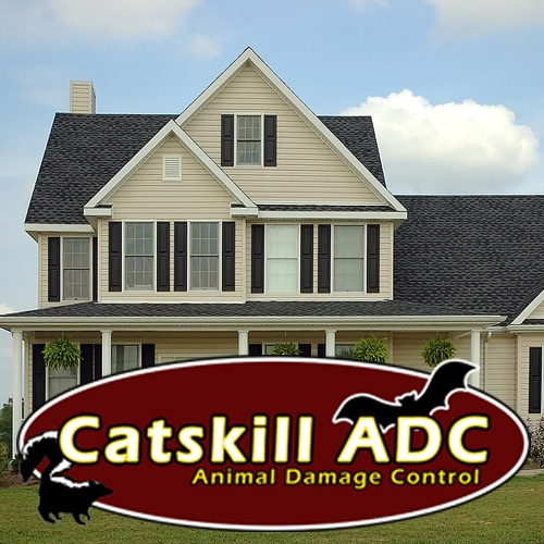 Catskill ADC