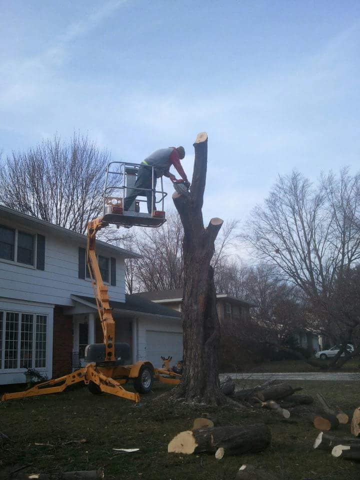 Pitts Lawn & Tree Service