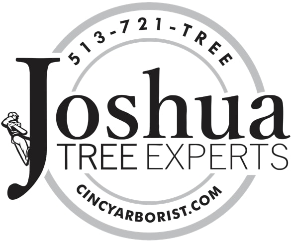 Joshua Tree Experts