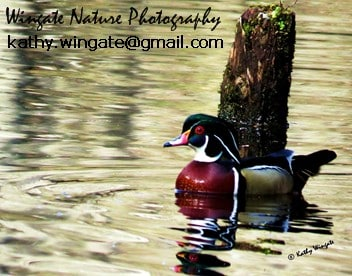 Wingate Photo Restoration and Nature Photography
