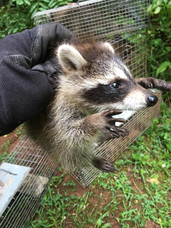 All Creatures Wildlife Services, LLC
