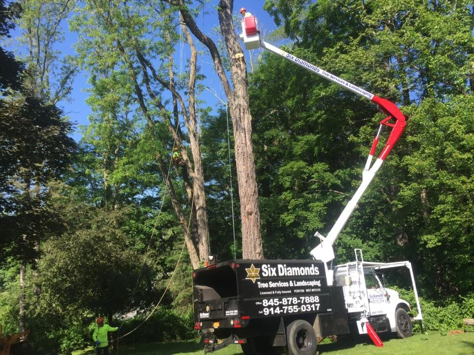 Six Diamond Tree Service and Landscaping Inc.