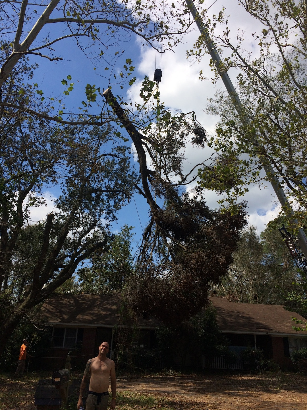 A Cut Above Tree Experts