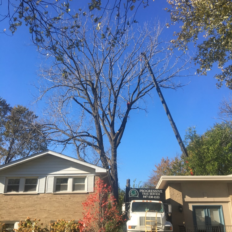 Progressive Tree Service