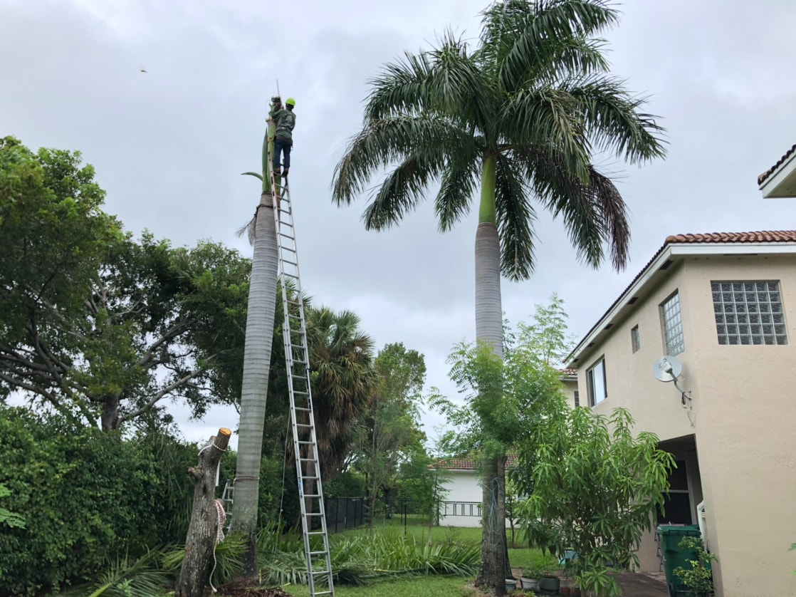 francisco tree and lawn services