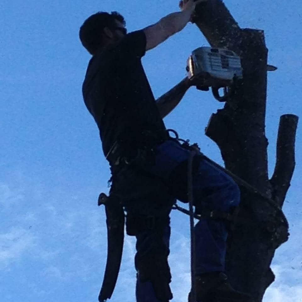 Bennett Tree Service