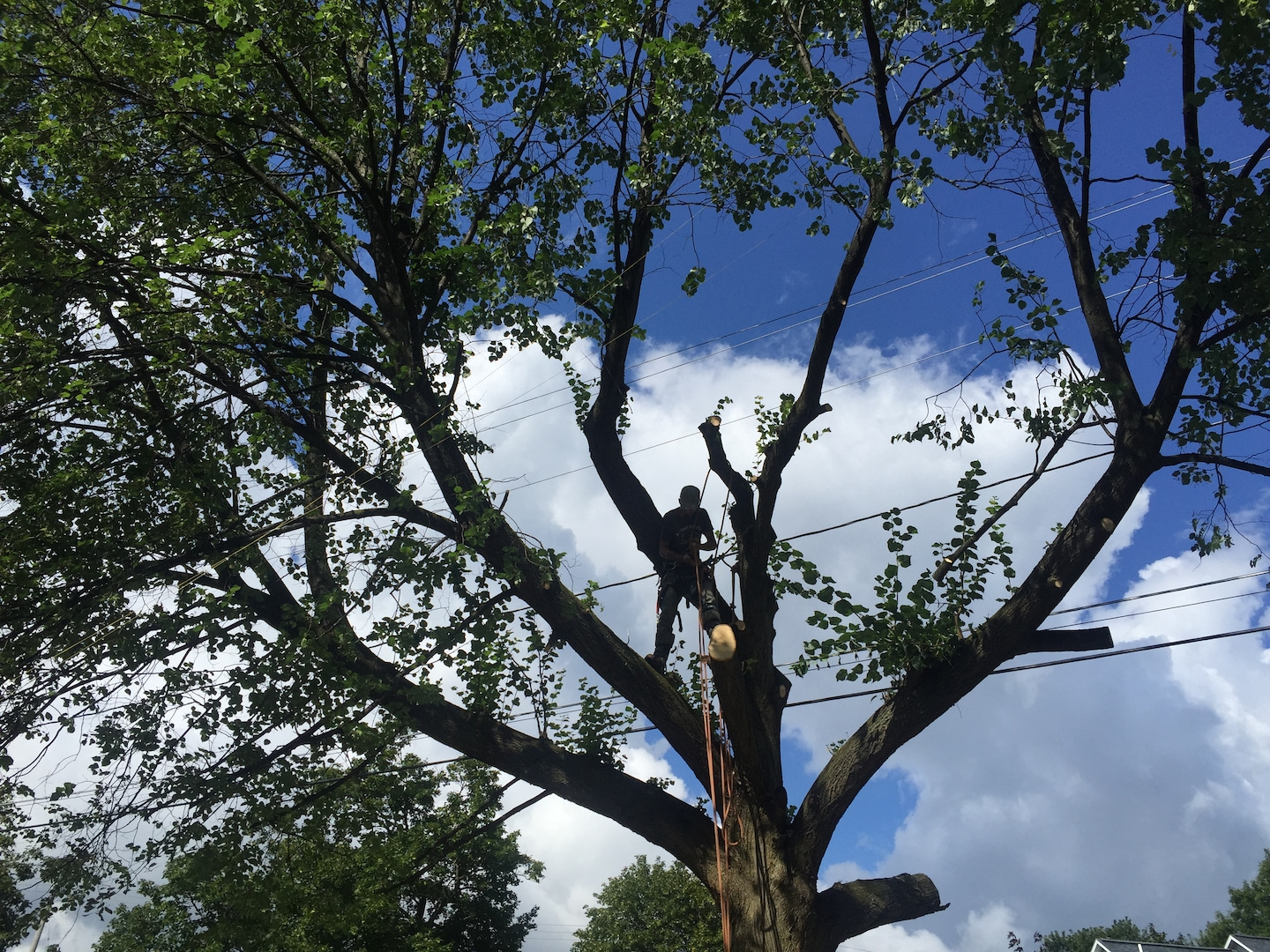 A-1 Tree and Stump Service