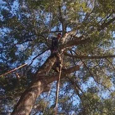 Trenton Tree Surgeons