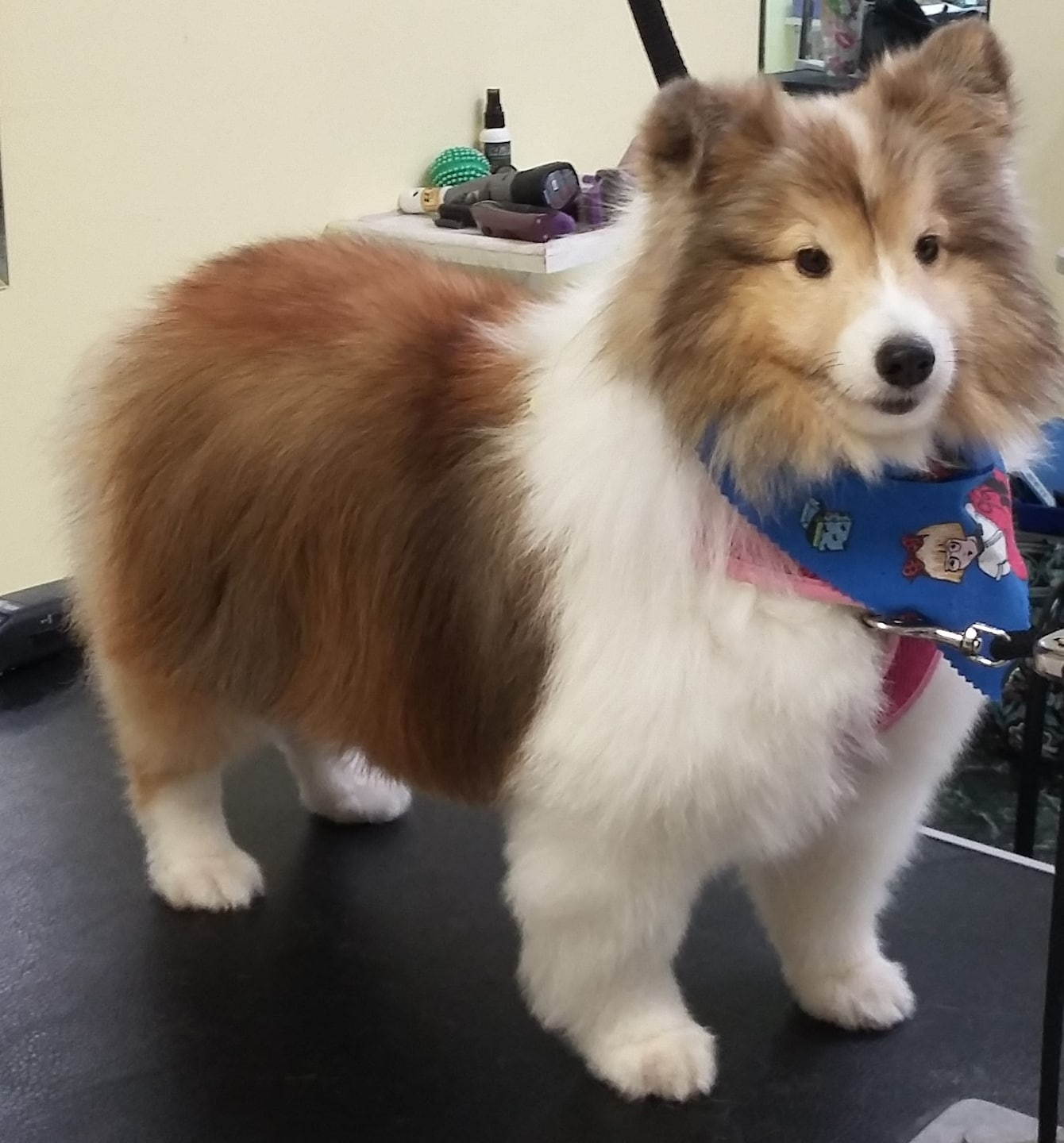 Paw Envy Mobile Dog Grooming