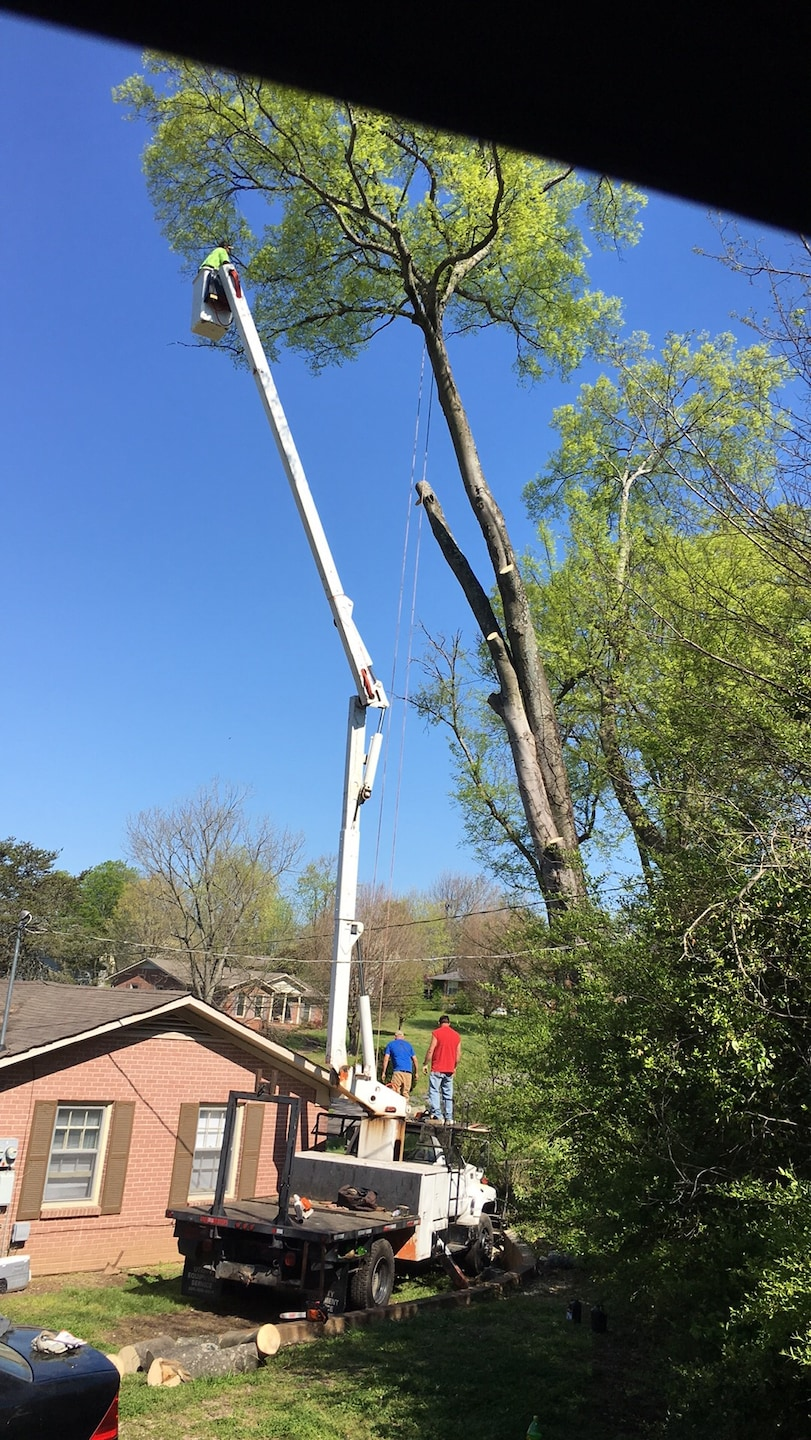 Quality First Tree Service