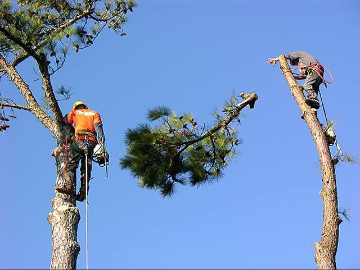 Benjamin Tree Service