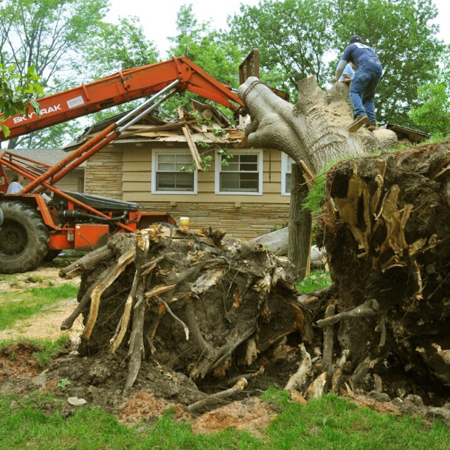 Crawford Tree Experts