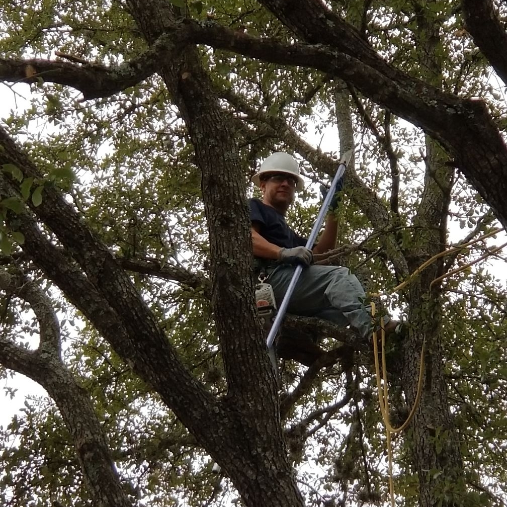 Specialty Tree Care of Austin LLC