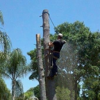 Dages Tree Service