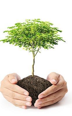 Heartwood Tree Care