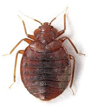 Albro Pest control llc