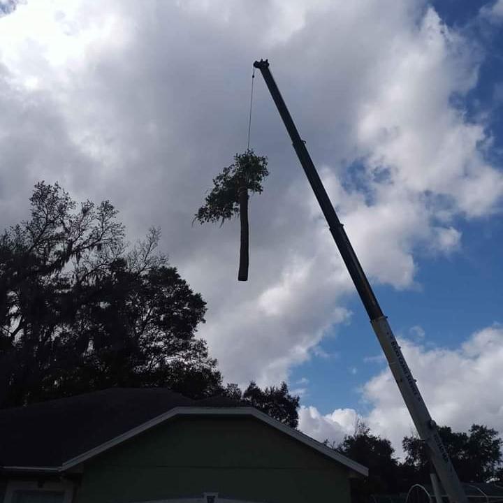Central Florida Tree Service