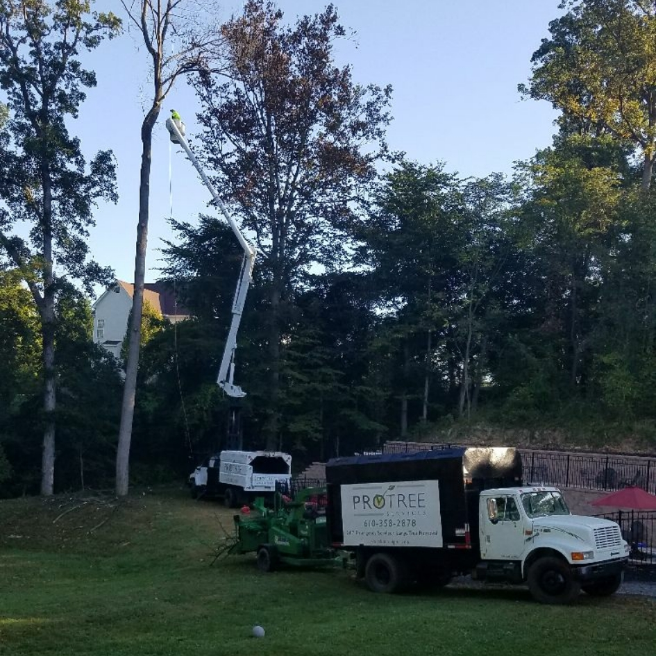 Pro Tree Service LLC