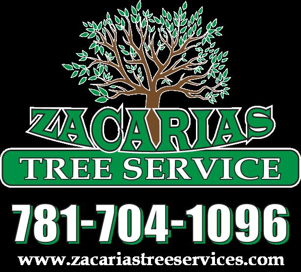 Zacarias Tree & landscape