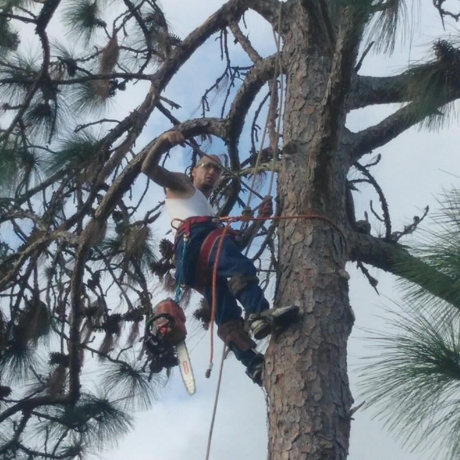 A-1 A.C.E. Tree Solutions
