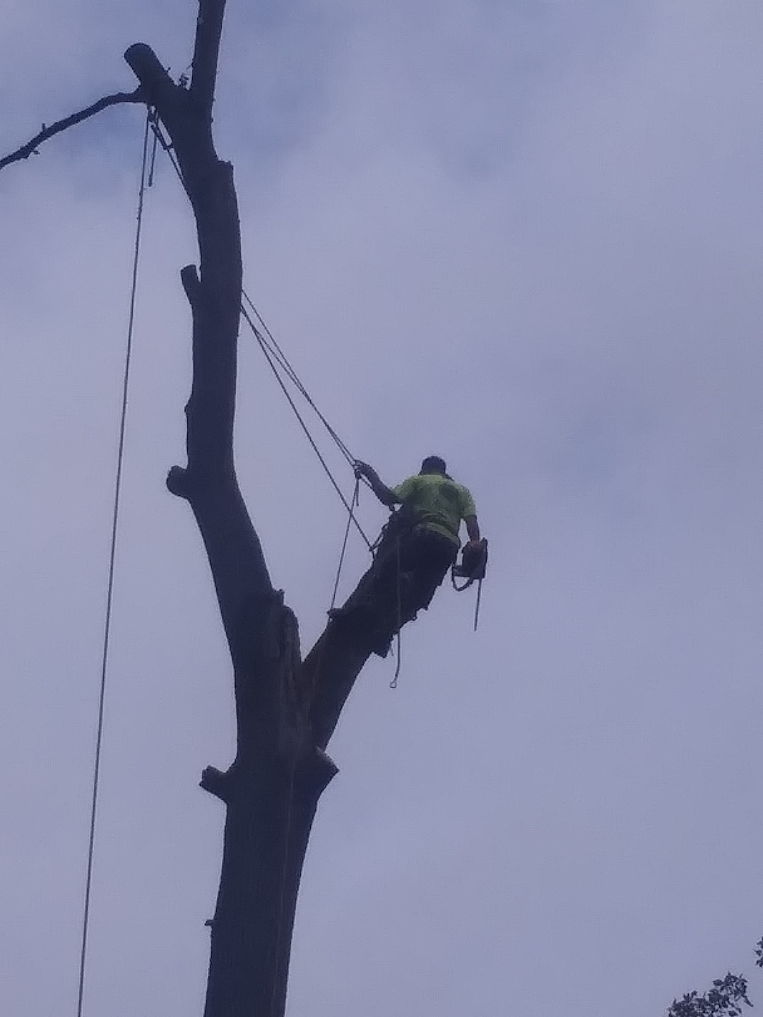 Branching Out Tree Care Experts