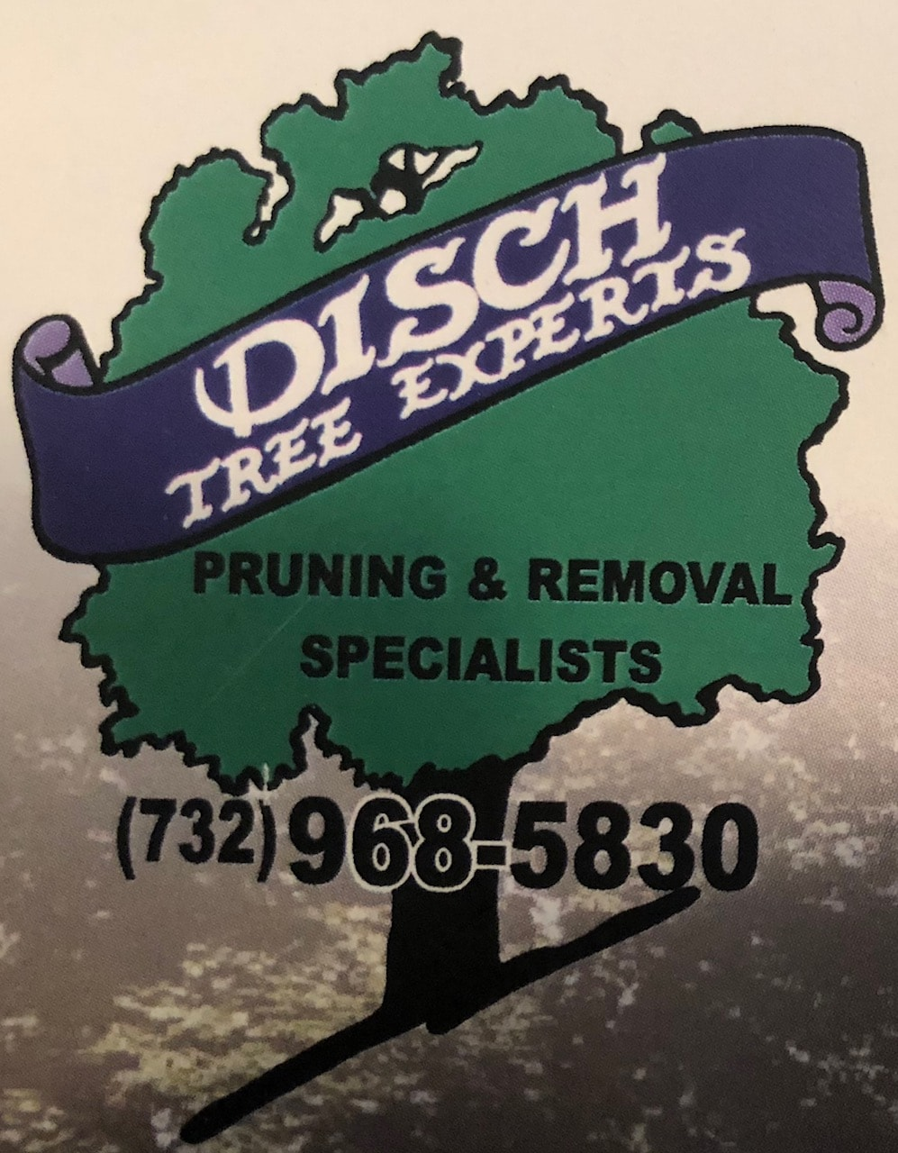 DISCH TREE EXPERTS