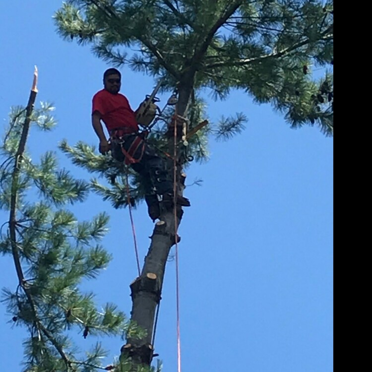 J&M tree service