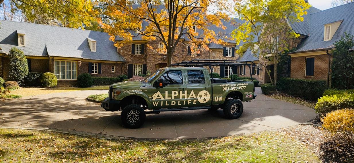 Alpha Wildlife