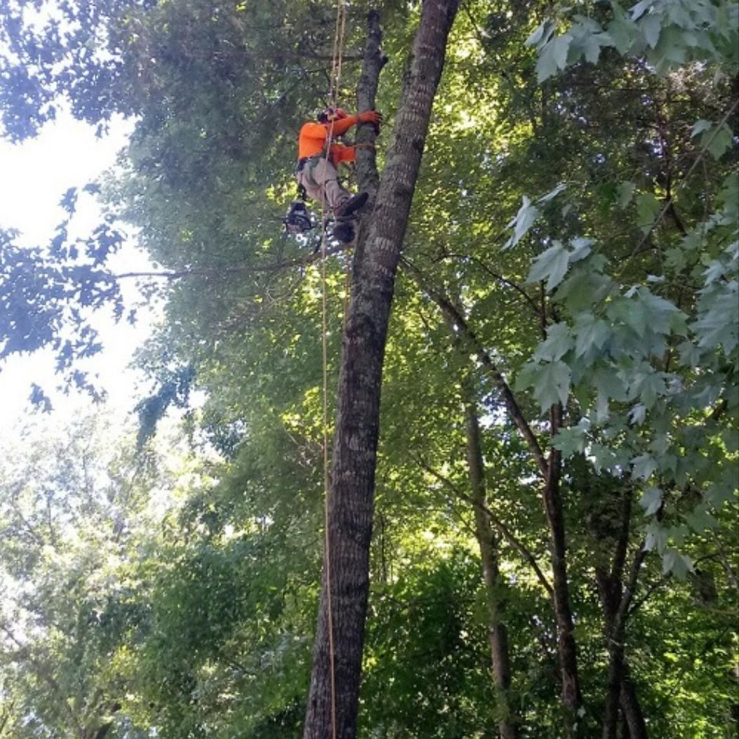 A.Gonzalez Tree Services