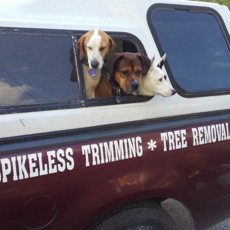 Birchman Tree Service