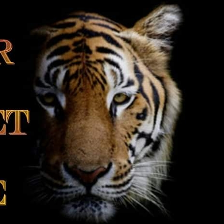 Tiger Carpet Care