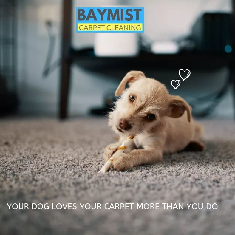 Baymist carpet cleaning