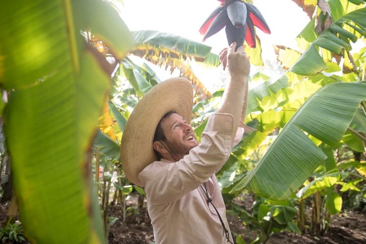 Fresh New Fruit landscaping