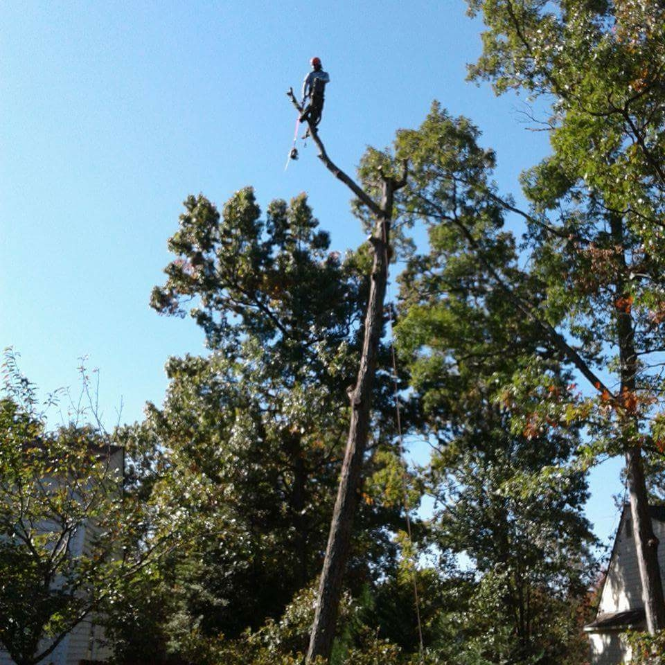 A & M Tree and Landscape Service, Inc.