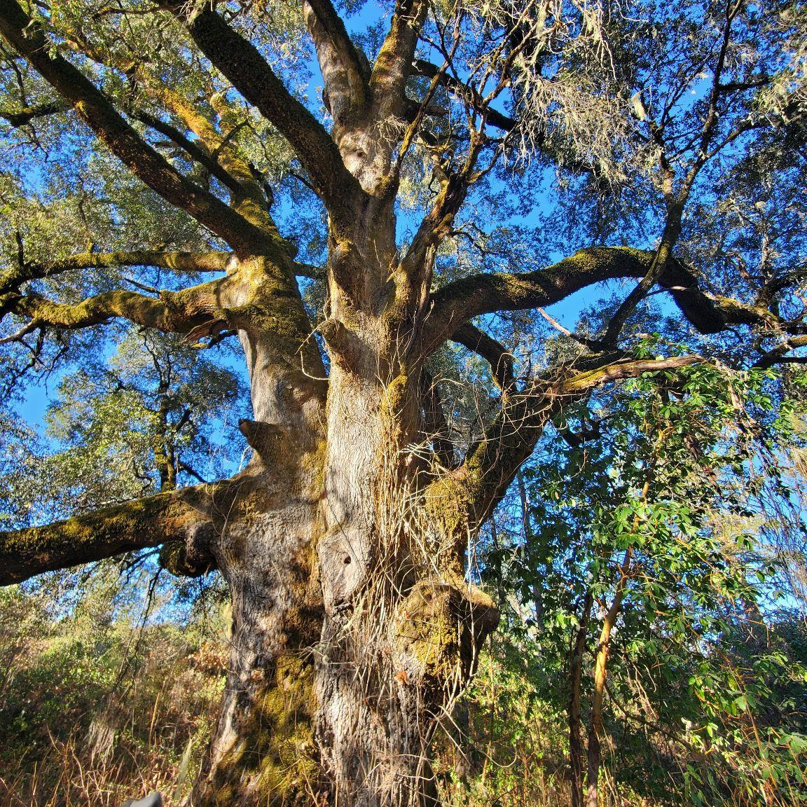 Sonoma county vegetation management