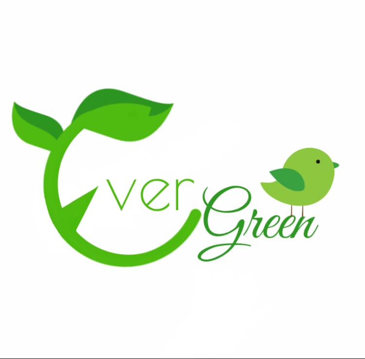 Evergreen Carpet & Upholstery Cleaning