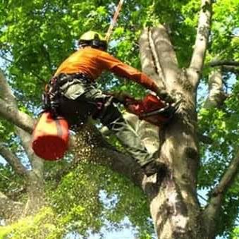 Earth Tenders Tree Care