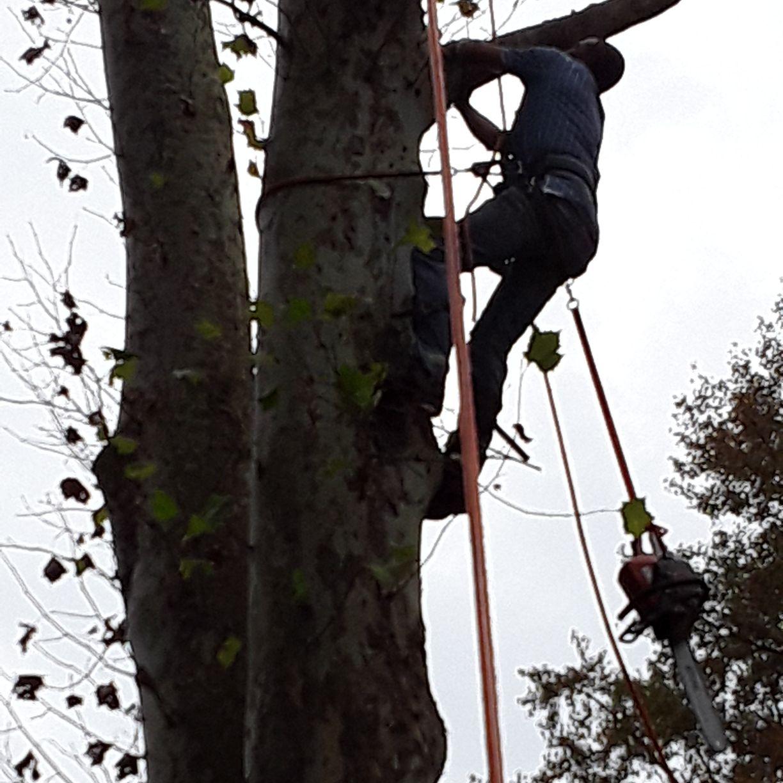 Hilltop Tree Service & Landscaping LLC