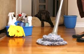 Lucy's Cleaning