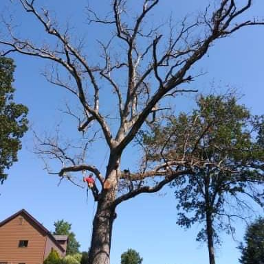 Earley And Sons,Tree Service & Landscaping LLC.