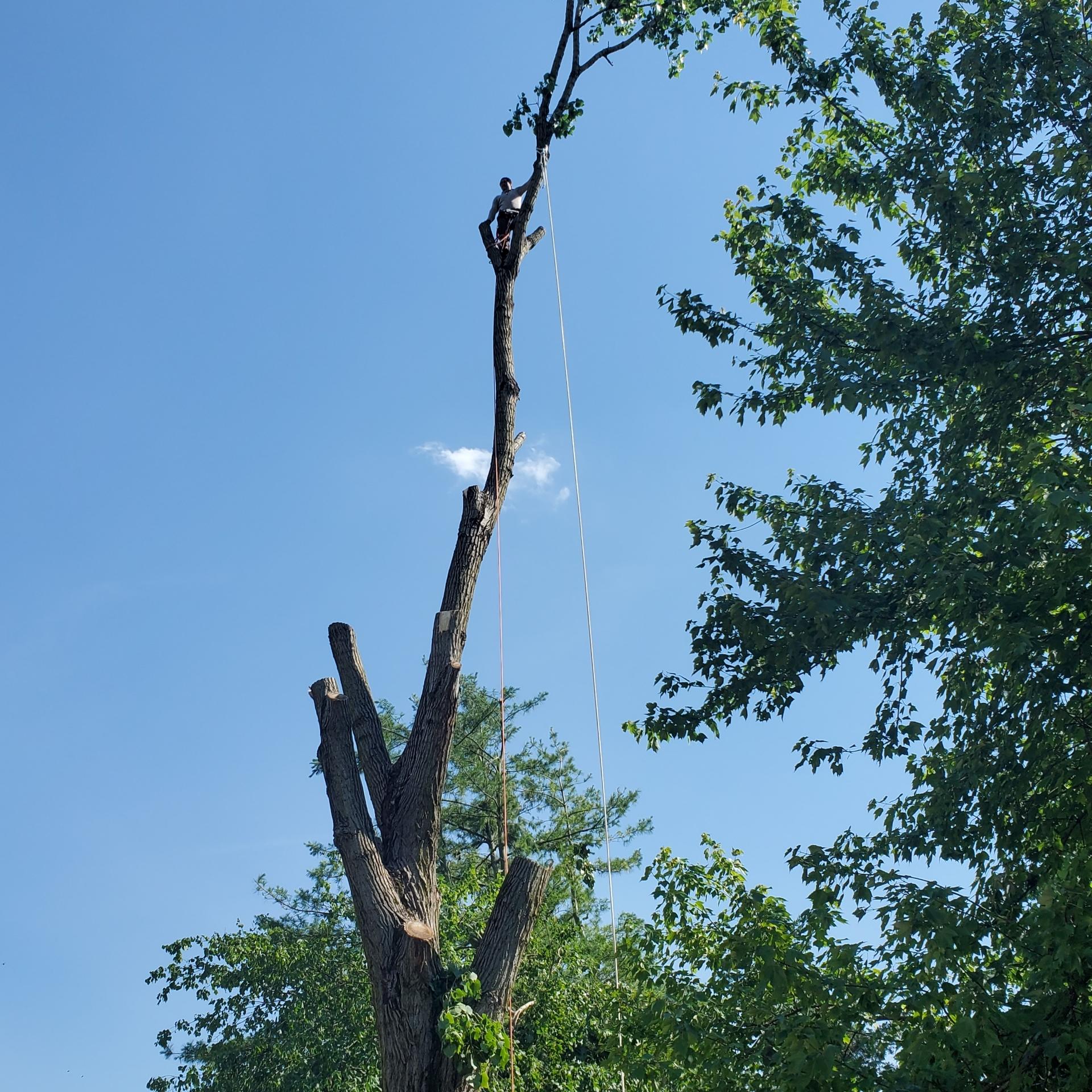 TRD tree service