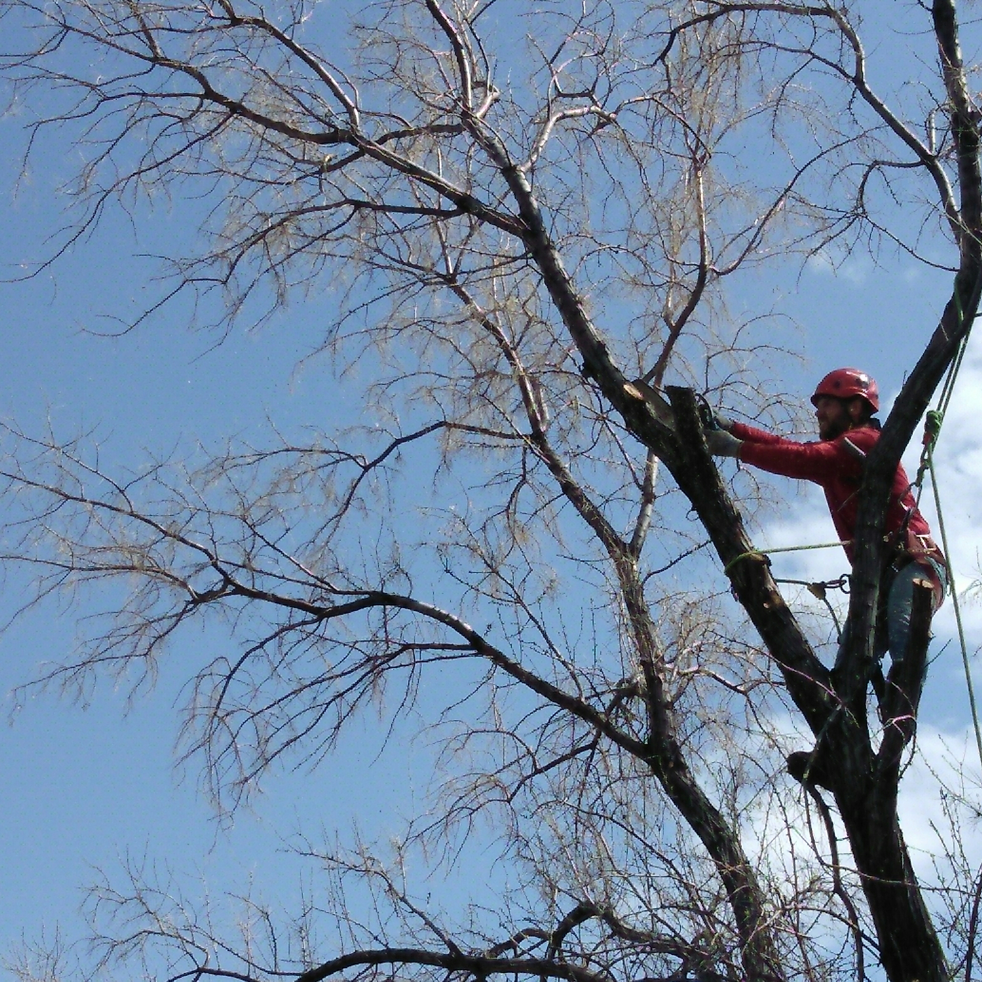 Up High Tree Care